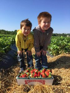 strawberry picking in baltimore